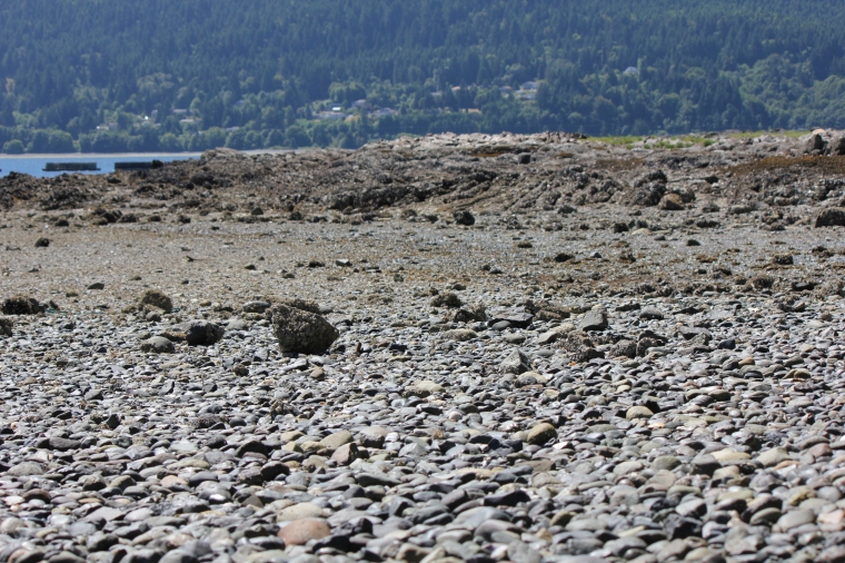 My favourite Vancouver Island beach at low tide.