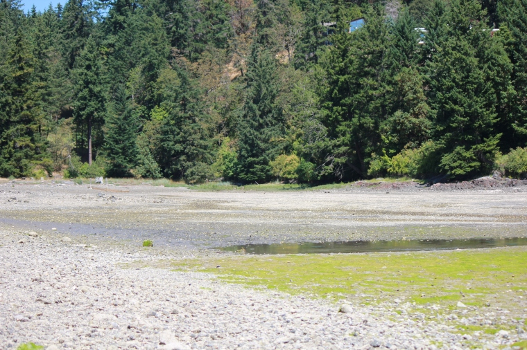 My favourite Vancouver Island beach at low tide, another angle.