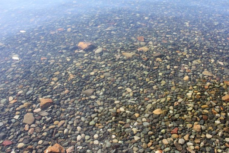 A look into the water at this Vancouver Island beach.