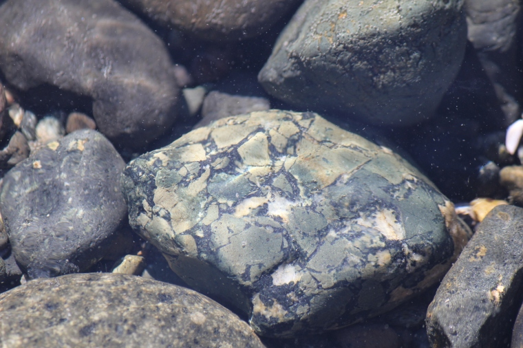 Dallasite in its natural habitat, the eastern Vancouver Island shoreline.