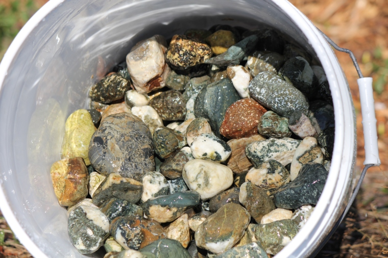 Vancouver Island beach stones, mostly tumbler-sized.