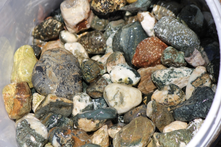 Closeup of the stones I picked up today. Bunch of Dallasite, some porphyries, other colourful quartzy rocks.