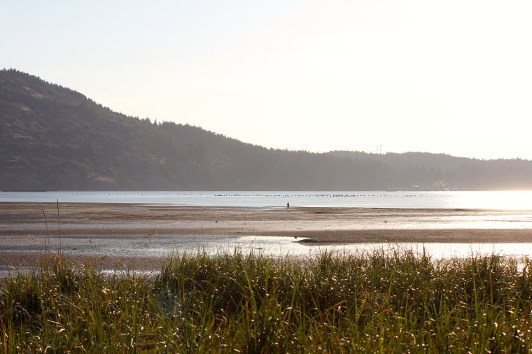 I love it when the tide goes out on Vancouver Island.